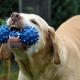 best natural dog toothpaste